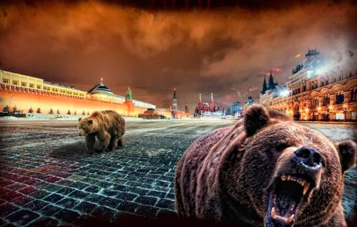 вряд кто-то баннер русского медведя фото недорого, есть