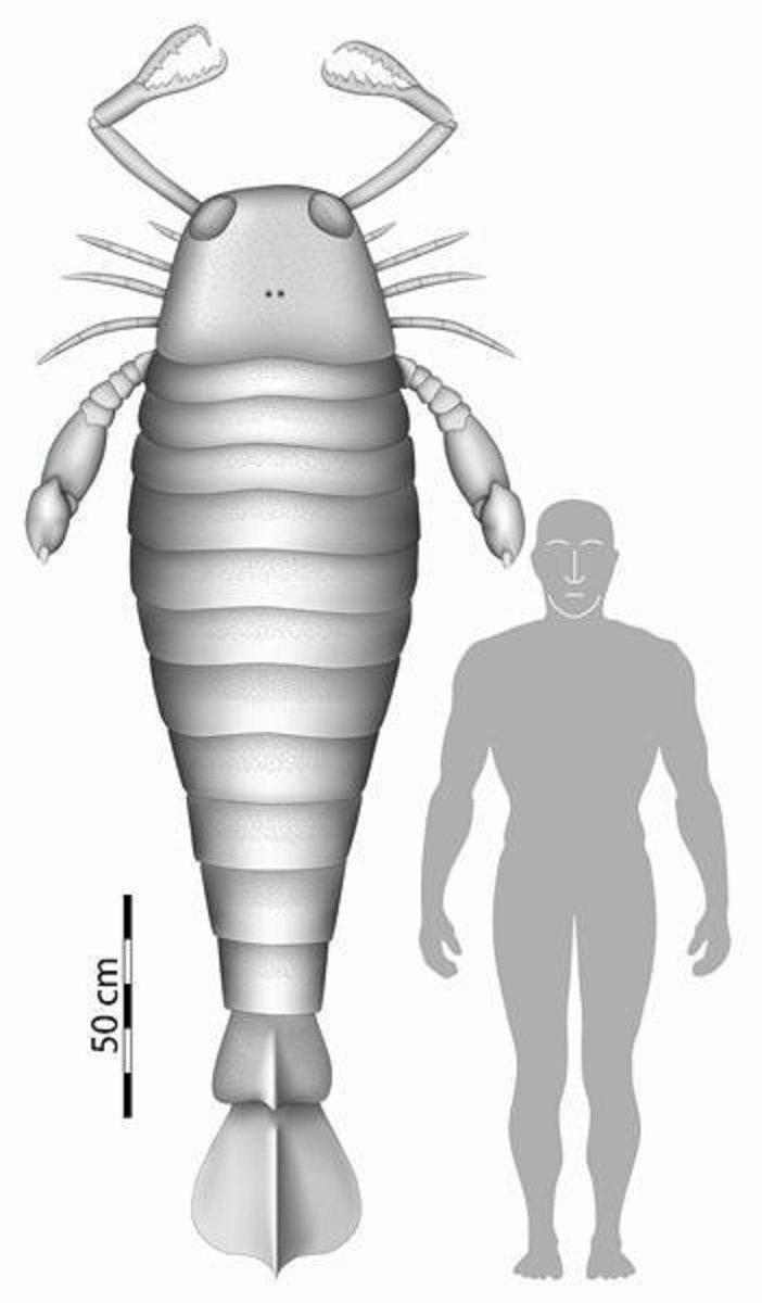 """Окаменевший огромный """"коготь"""" - длиной 49 см, угадайте какому гиганту он принадлежал? интересно, наука, окаменелости, палеонтология"""