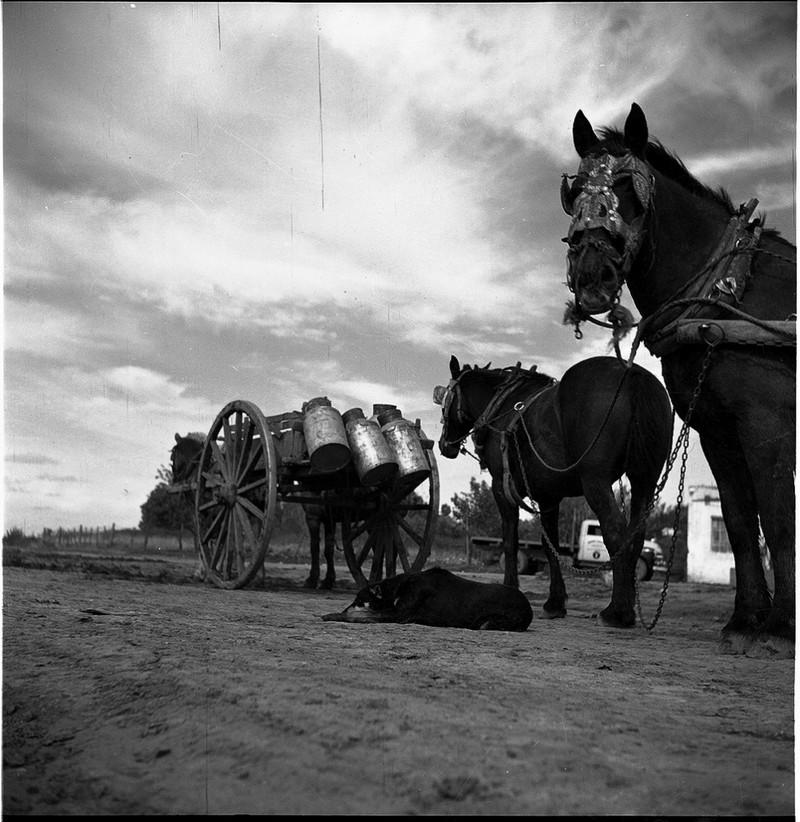 Тело, свет, отражение. Легенда аргентинской фотографии Аннемари Генрих  49
