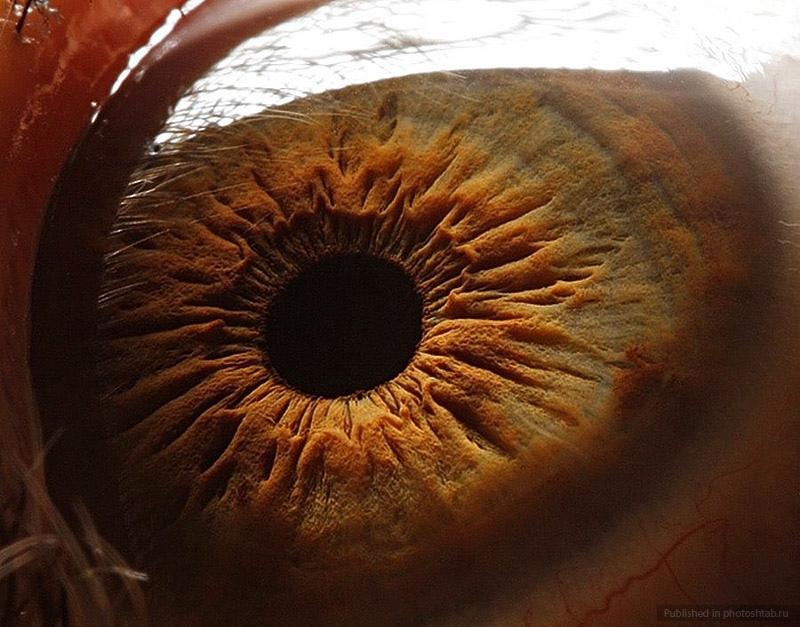глаз человека в разрезе фото примеру, английский алфавит