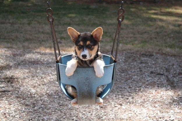 самые милые щеночки в мире (38)