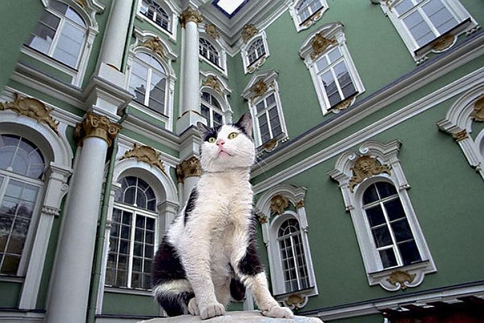 Воспитание кошки картинки найденные маршруты