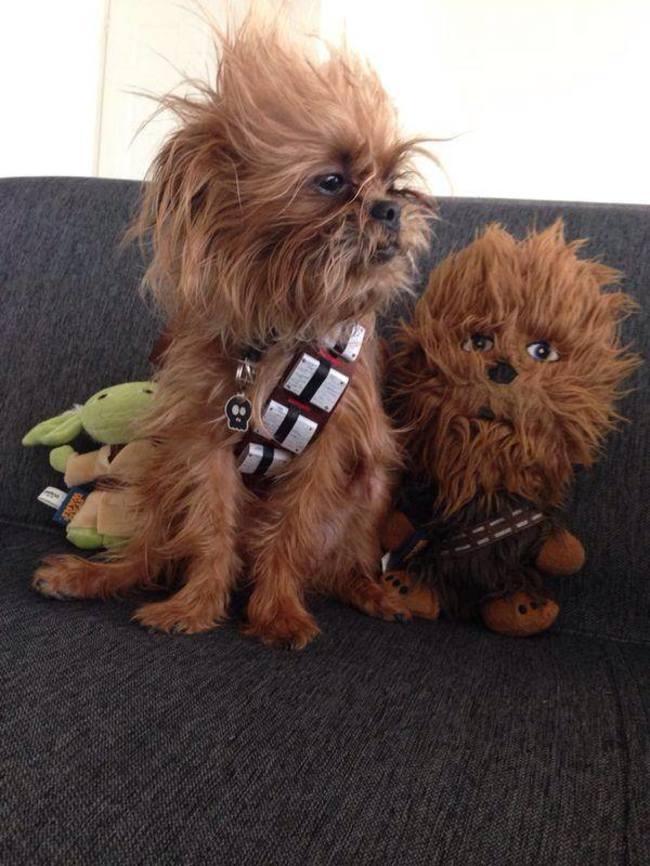 Животные и их двойники плюшевые игрушки, игрушки клоны двойники животных
