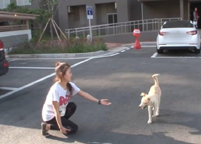 Собака и девушка