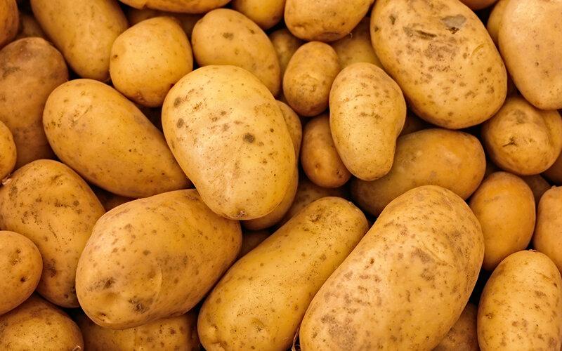 Усвояемость картофеля организмом собаки составляет порядка 90%. Фото Wounds_and_Cracks/Pixabay