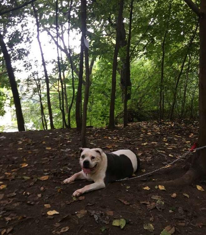 «Заберите меня домой!»: привязанная собака одиноко лежала под деревом, ожидая помощи