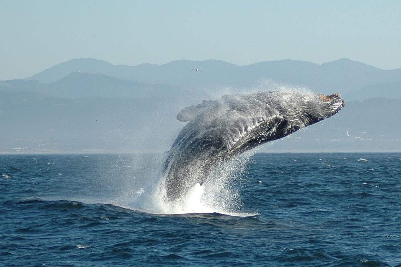 Эфир: Как отмечают Всемирный день китов и дельфинов в России Общество