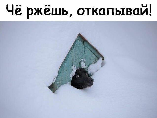 Прикольные и смешные картинки за 12 февраля 2019                     (50 фото)
