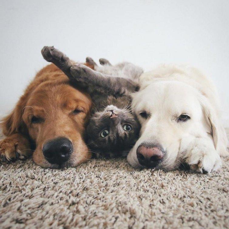 Друзья животные картинках