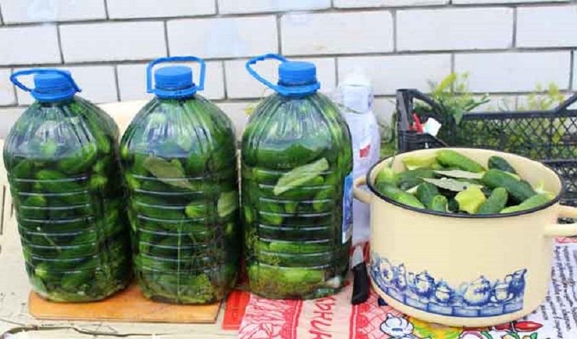 Хрустящие огурцы в пластиковой бутылке: на вкус, как из бочки