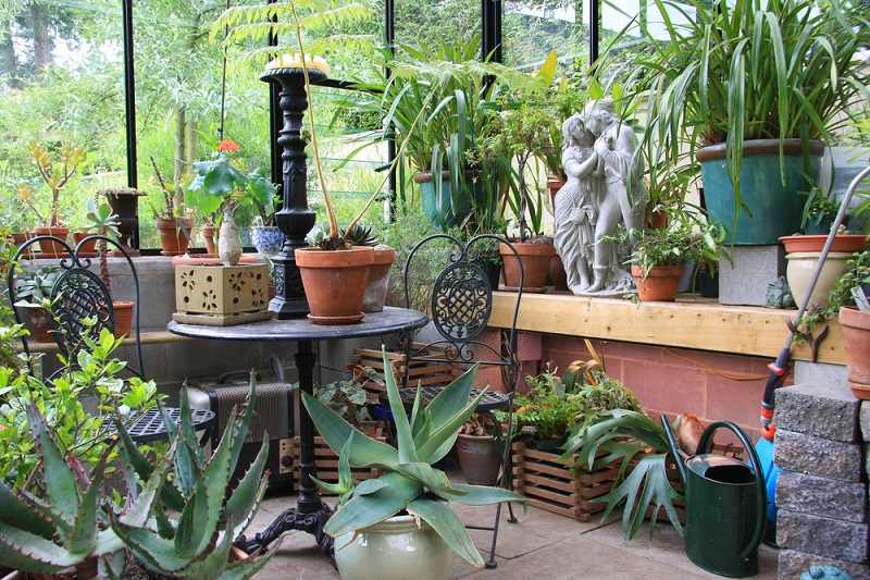 Топ 9 лучших подкормок для комнатных цветов. Они вернут жизнь даже сухим растениям!