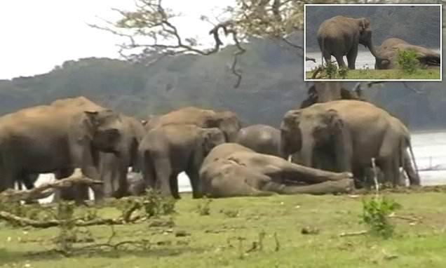 Видео: слоны прощаются с пог…