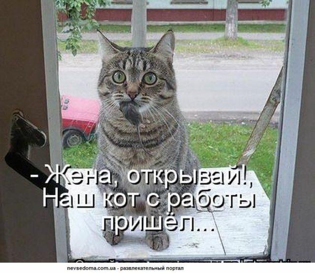 Смешные картинки с надписью про котов