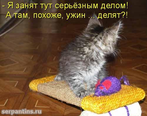 Забавные фото с подписями пр…