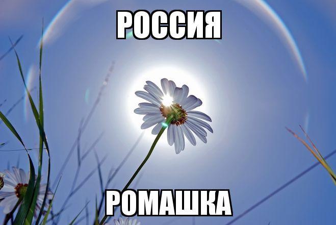 Цветы - национальные символы стран