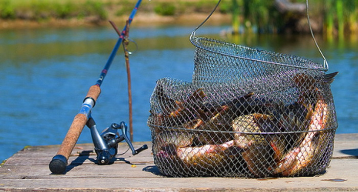 Какие есть ловля рыбы фото