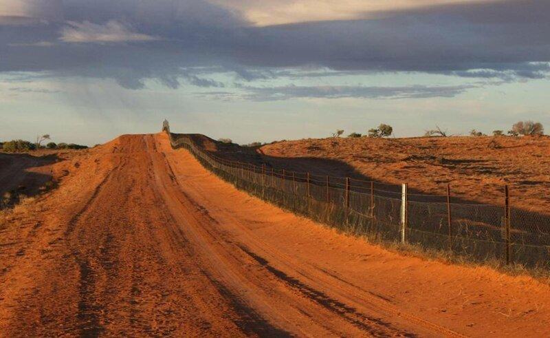 Забор Большой Барьерный риф, австралия, интересное, континент, природа, факты