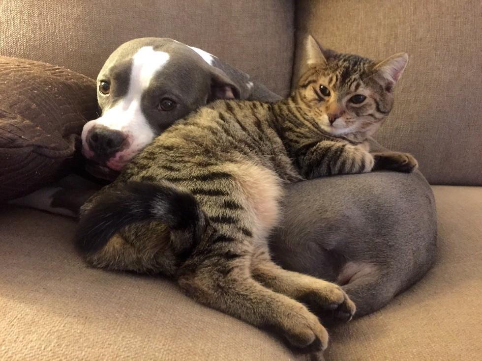 Меня всегда ставит в тупик вопрос: «кто тебе больше люб-коты или собаки?». Ответа на него просто не существует