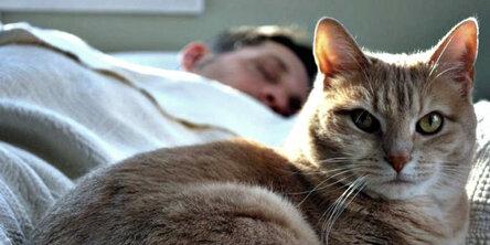 Совместный сон с котиком: почему не пускать питомца к себе в постель – маленькое преступление домашний очаг,жизнь,коты