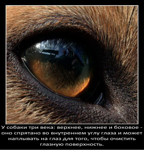 Любопытное о собаках