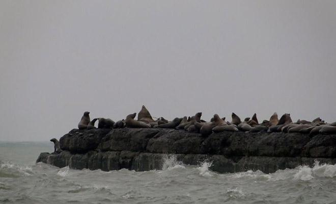 Моряка выбросило на скалу и он прожил на ней 6 лет благодаря веслу и шкуре тюленя Культура