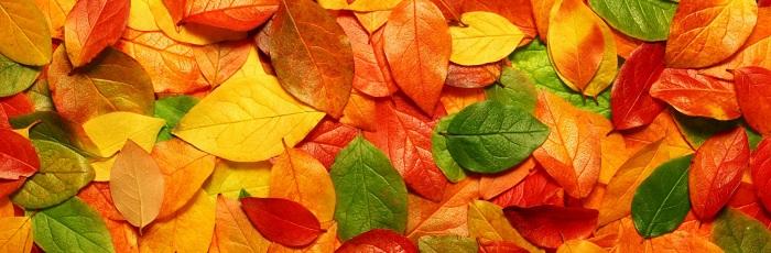Почему листья меняют цвет?