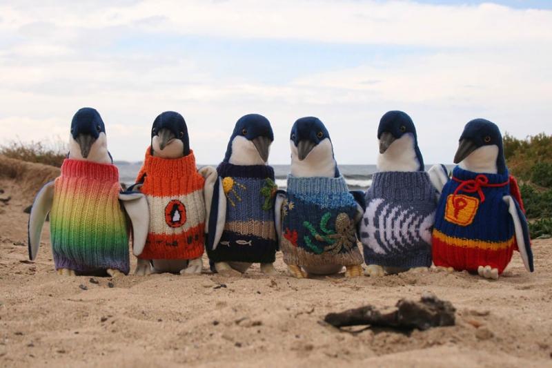 Старейший житель Австралии вяжет свитеры для пингвинов