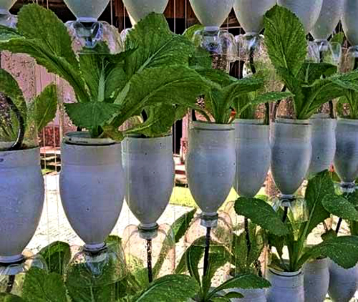 Вертикальный сад из бутылок.