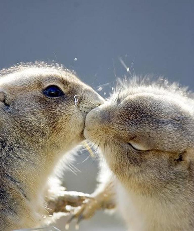 чего нежный поцелуй картинки прикольные секрет том