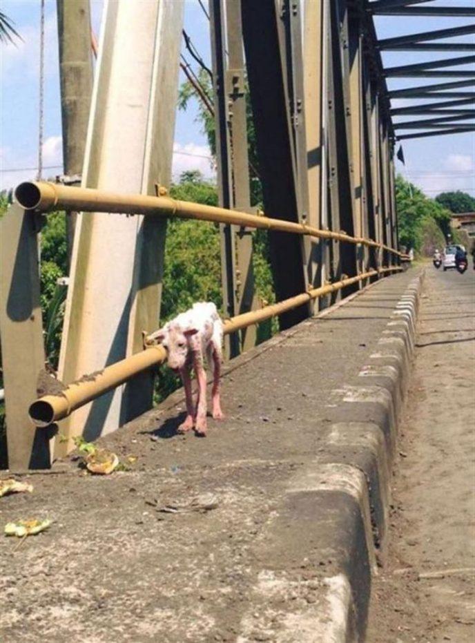 Истощенный пес шел по мосту, внезапно на его пути возникли люди
