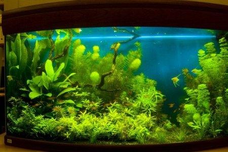 аквариум в голландском стиле