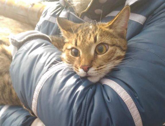 Астраханцы всем миром спасли кота, прокуковавшего неделю на дереве