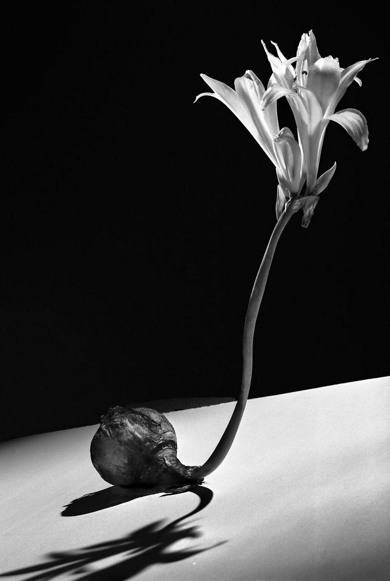 Тело, свет, отражение. Легенда аргентинской фотографии Аннемари Генрих  38