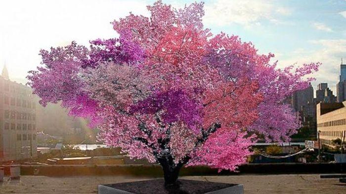 Уникальное дерево, на котором растет 40 видов фруктов! Удивительно!