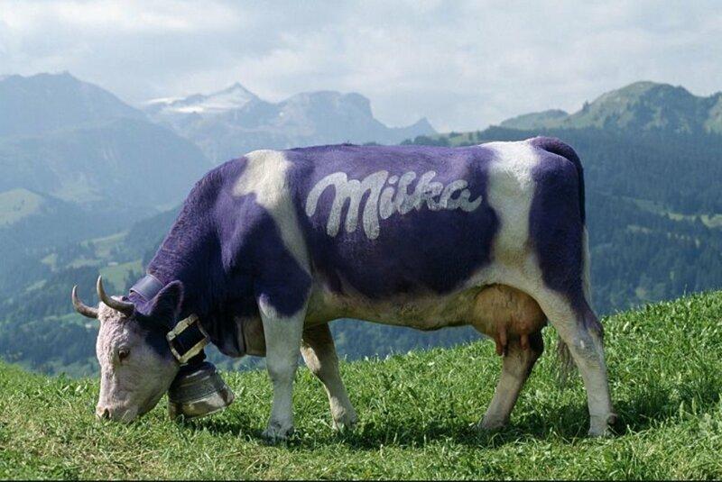 """""""Милка"""" - шоколад для иностранцев жизнь в Швейцарии, интересно, факты, швейцария"""