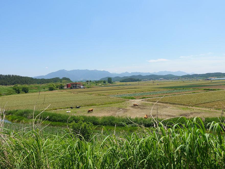 Фотопроект о разнице между Южной и Северной Кореей
