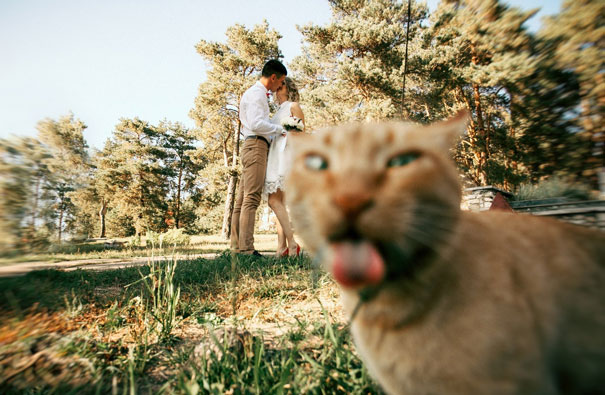 30 кошек, которые очаровател…