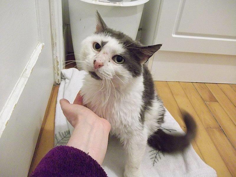 Грустный кот выживал на улиц…
