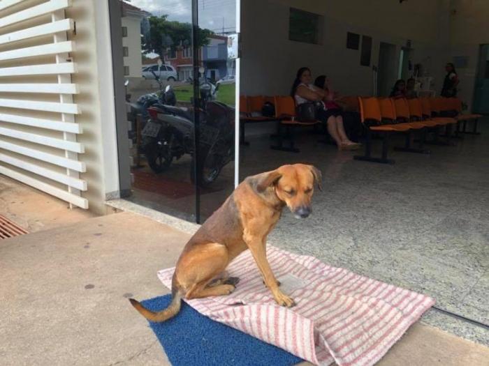Собака четыре месяца ждет у …