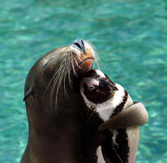 14 действительно странных примеров дружбы среди животных, которые удалось поймать на камеру