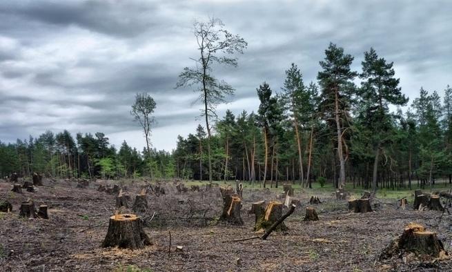 За каждый миллиард от Запада Украина расплачивается невосполнимыми ресурсами