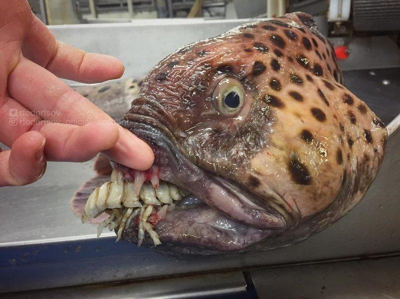 Новые фото фантастических морских существ от Романа Федорцова Роман Федорцов, в мире, живность, красота, морские существа, океан, рыба