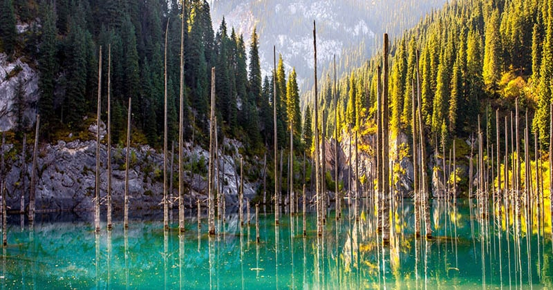 Затонувший лес в озере Каинды, в котором деревья «растут вверх ногами»