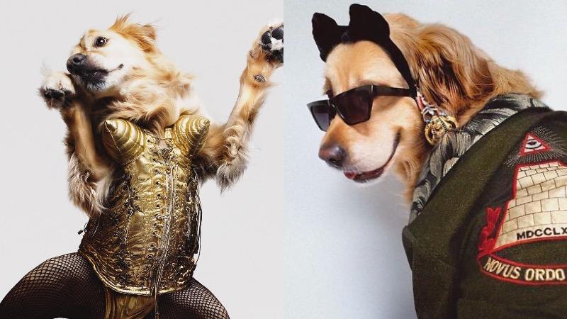 Фотограф со своим питомцем воссоздают популярные образы Мадонны