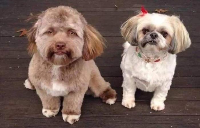 Йоги – собака с человеческим…