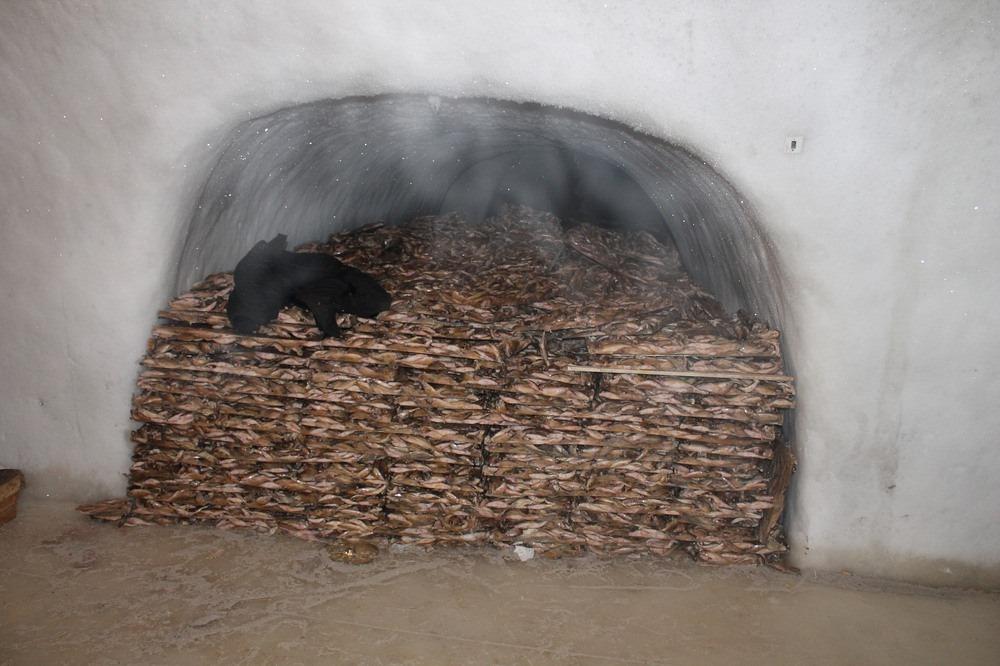 Ледяные туннели Ямала для хранения рыбы