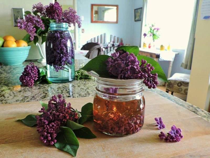 Пока цветет сирень заполните банку растительным маслом и фиолетовыми цветками