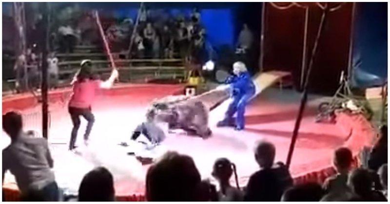 Медведь едва не убил дрессировщика во время циркового представления Шапито, видео, животные, медведь, нападение, представление, цирк