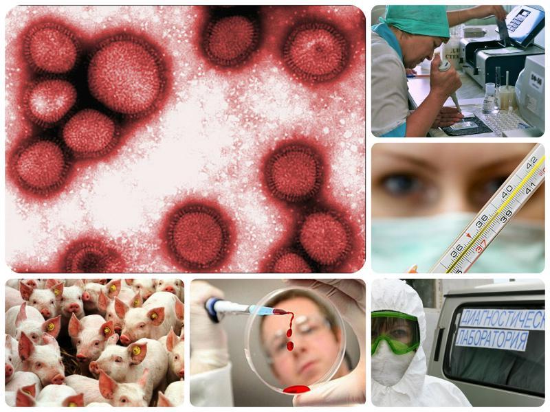 Картинка свиного гриппа