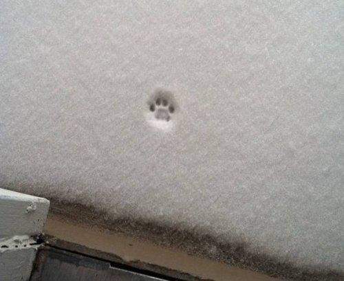 О сложных взаимоотношениях кошек со снегом